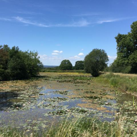 Cara's Lake